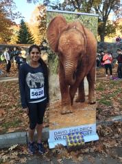 Enormous Elephant Run 10K